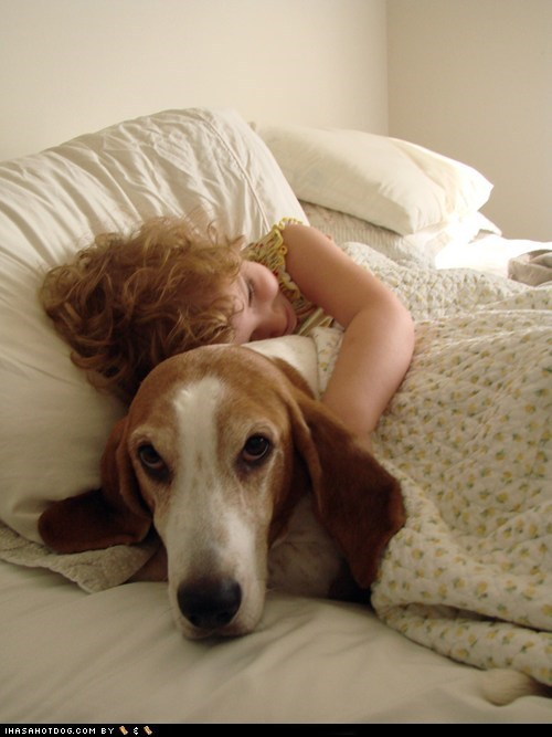 basset hound,bed,goggie ob teh week,good morning,hug,hugs,kid,sleepy,tired
