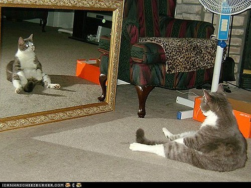 around the interwebs human-like mirrors people pets sitting - 5493038336