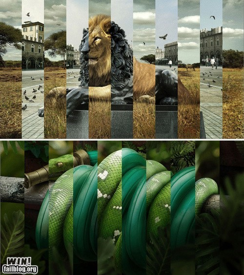 collage digital lion nature Photo snake urban - 5493113600