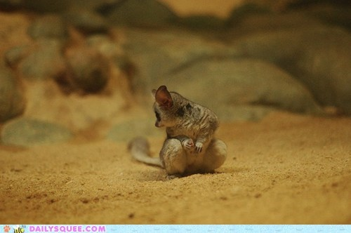baby blurry galago looking squee spree - 5494156544