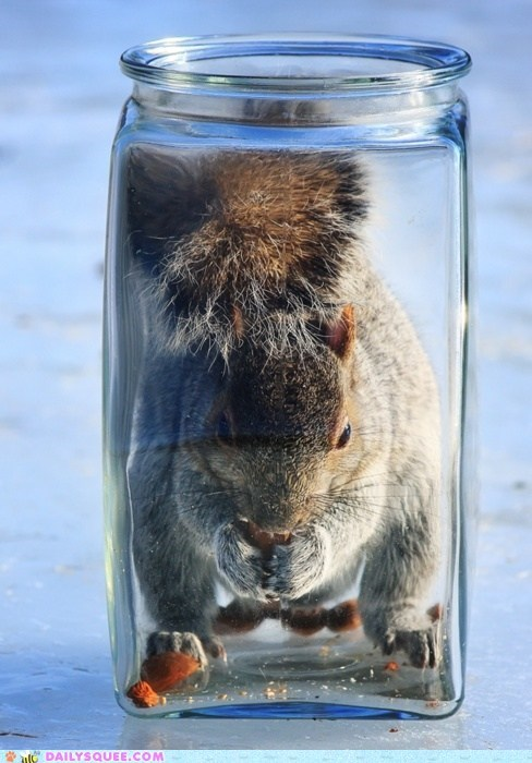 acting like animals eating experience explanation jar jarring naïve nomming nut pun squirrel trap