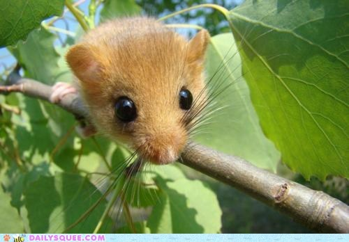 adorable eyes hypothetical idiom peeking rodent Staring unbearably squee