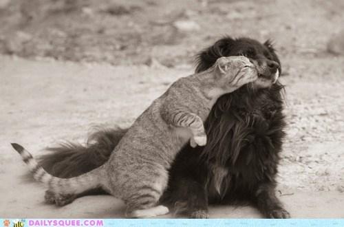 cat cuddling friends friendship Interspecies Love nuzzling static - 5494211328