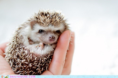 baby fair Hall of Fame hand handheld hedgehog holding palm prickly tiny trade - 5494222592