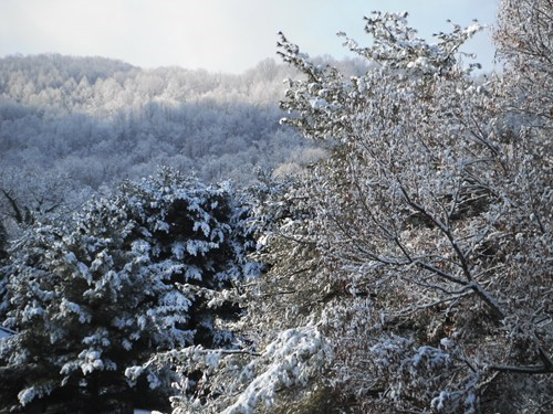 Forest getaways great smokey mountains north america North Carolina snow tennesee trees united states user submitted winter - 5494351360