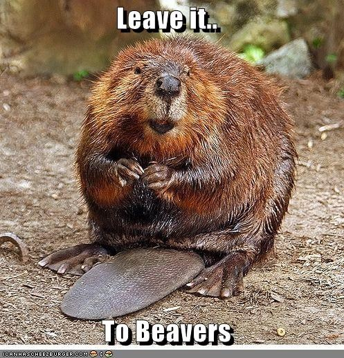 animals beaver Leave it to Beaver - 5494552576
