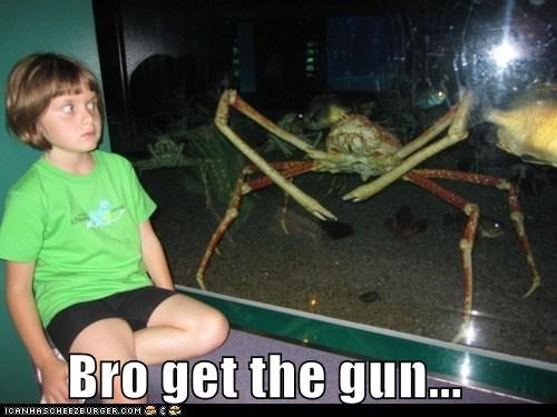 crab,do not want,get the gun,gun,kill it,no,shocked,shoot it,what the hell,wtf