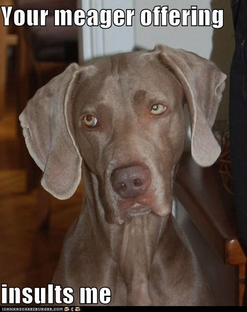 close but no cigar insulting nice try no unhappy weimaraner
