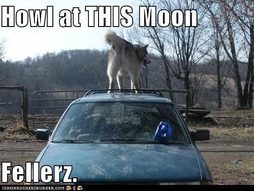 butt full moon howl howling husky - 5495046912