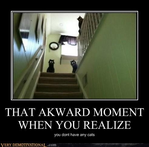 Awkward Cats scary Terrifying wtf - 5496241664