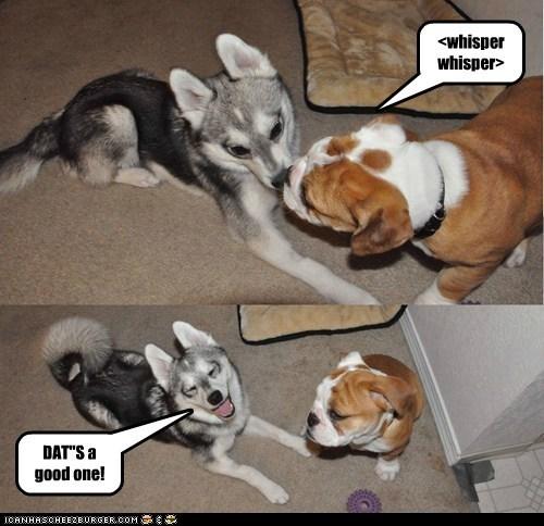 """<whisper whisper> DAT""""S a good one!"""