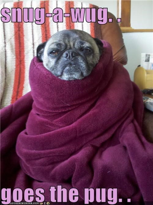 snug-a-wug. . goes the pug. .