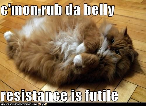 c'mon rub da belly  resistance is futile