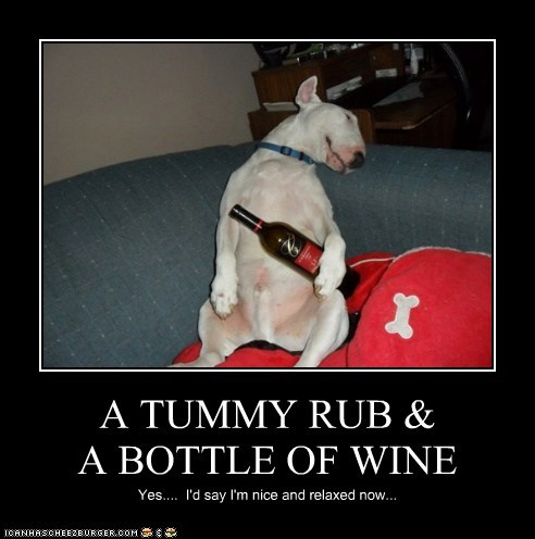 awesome bull terrier drinking drunk relax relaxed relaxing tummy rub wine