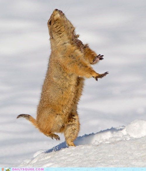acting like animals,cold,d.a.n.c.e,dance,dancing,do not want,explanation,justice,movement,prairie dog,snow,song,staying warm,warmth
