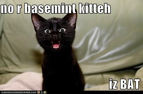 basement cat bat caption captioned cat imitation impression kitten no not