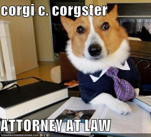 attorney,corgi,fancy,job,law,lawyer,tie,work