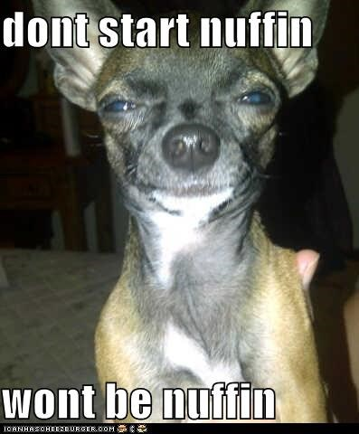 chihuahua dont-start-it dont-start-with-me fight glare