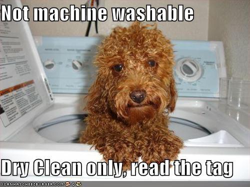 bath bath time dry clean dry clean only labradoodle machine washable washing machine - 5499411200