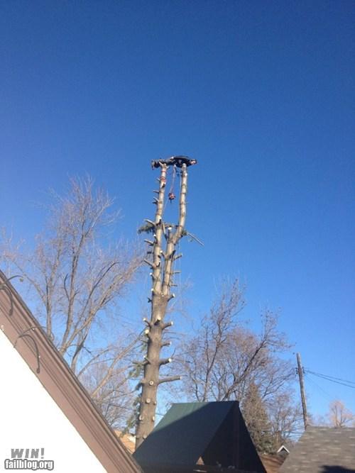 climbing heights Planking stunt tree - 5501246720
