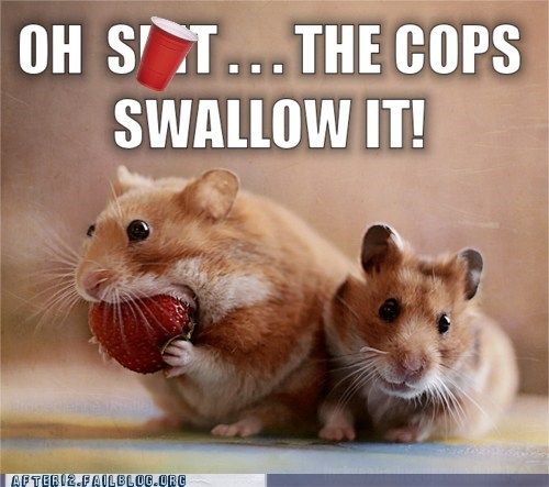 crunk critters drugs gerbil hamster rodent swallow the cops