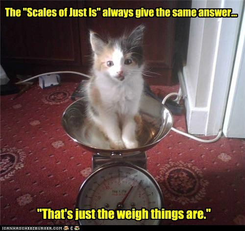 caption captioned cat homophones is just justice pun scale way weighing weight - 5501845504