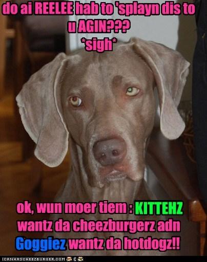 Cheezburger Image 5501906176