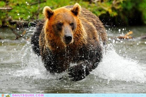 acting like animals bear gliding hover hoverbear hovering hydroplaning illusion running water
