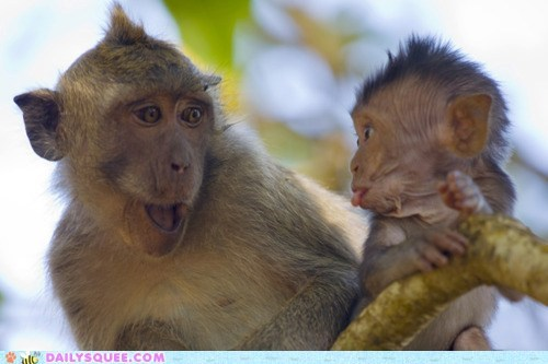 baby,expression,face,faces,funny,Hall of Fame,mocking,monkey,monkeys,parent,playing,silly