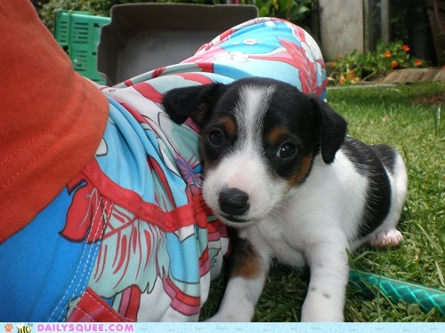 baby dogs foolproof fox terrier innocent irresistible puppy reader squees sleeping works every time
