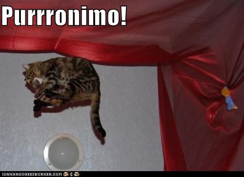 caption,captioned,cat,geronimo,jump,jumping,pun