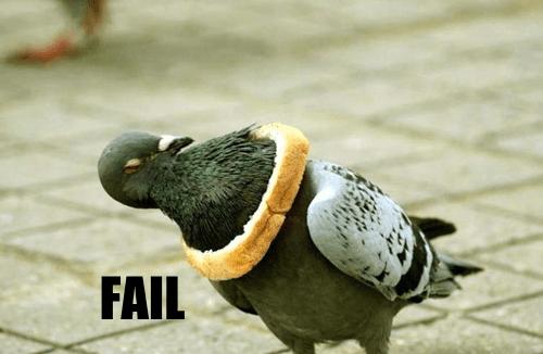 animal animals pigeon stuck - 5502236160