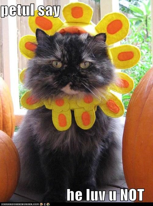 caption,captioned,cat,costume,do not want,dressed up,Flower,hate,love,not,petal,upset
