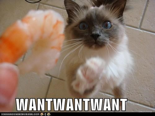 caption,captioned,cat,do want,gimme,noms,shrimp,want