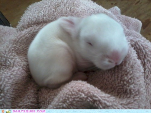 baby bunny check in happy bunday heartwarming progress rabbit reader squees recovery runt touching