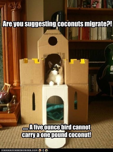 bird,caption,captioned,cat,coconut,difference,disbelief,migrate,monty python,monty python and the holy grail,nonsense,quote,suggesting,suggestion,weight
