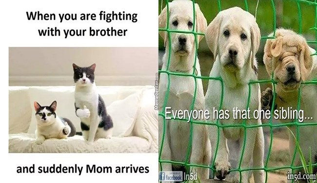 funny animal siblings