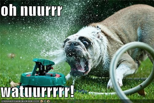 best of week,derp,goggie,sprinkler,water