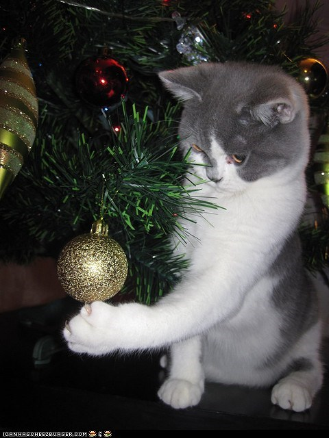 advent calendar,christmas,christmas tree,cyoot kitteh of teh day,destruction,holidays,ornaments,shiny,the 25 days of catmas
