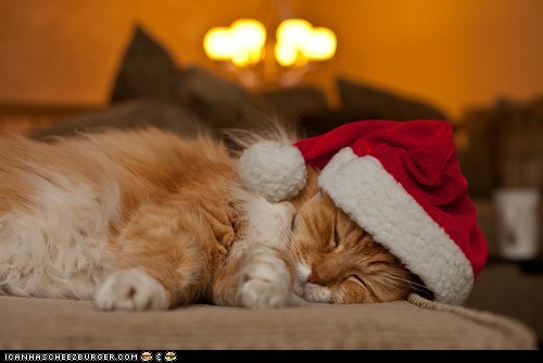 advent calendar christmas cyoot kitteh of teh day holidays santa santa hat sleeping the 25 days of catmas tired - 5504750592