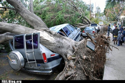 bad puns cars crash tree - 5504815104