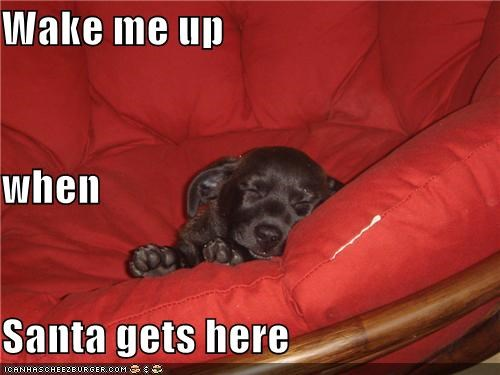 asleep,Black Lab,labrador retriever,puppy,santa,santa claus,tired,waiting for santa,wake up