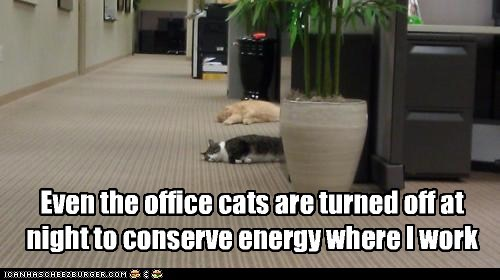 asleep caption captioned cat Cats conserve energy even night off Office purpose sleeping turned work - 5505456896