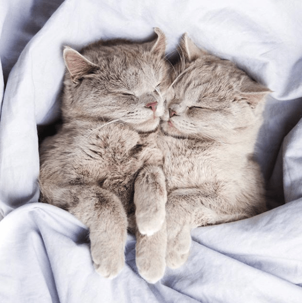 cute cat pics kitties that cuddle each other to sleep