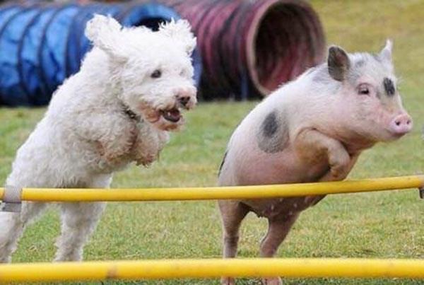 weird animal photos double take look again
