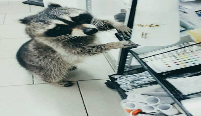 dogs cute vet cute raccoons raccoons Cats funny funny animals animals - 5506053