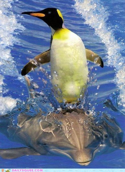 acting like animals chase dolphin fleeing Hall of Fame penguin riding running shoop steed - 5506404096