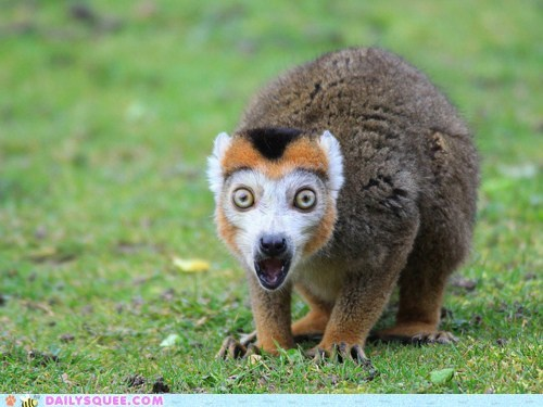 acting like animals cannot unsee do not want lemur quote shocked the horror traumatized wide eyed - 5506416896
