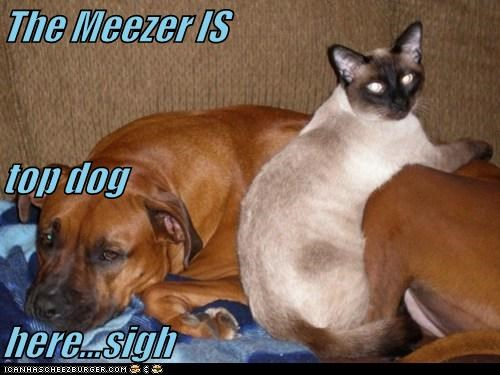 Cheezburger Image 5506466816
