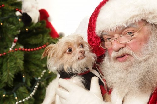 creepy,dogs,mall,pet,santa,scared